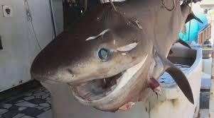 peshkaqeni 400 kg ne durres