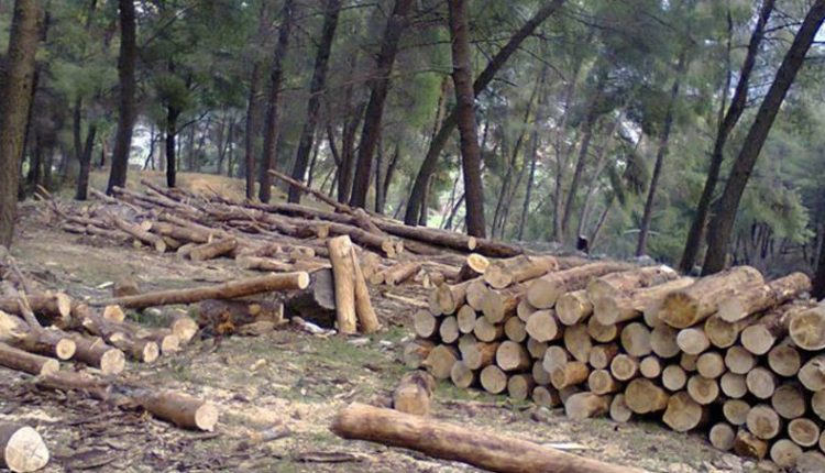 prerja-e-drunjeve